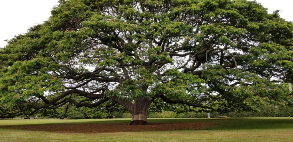 この木なんの木は見方によってはスカスカ