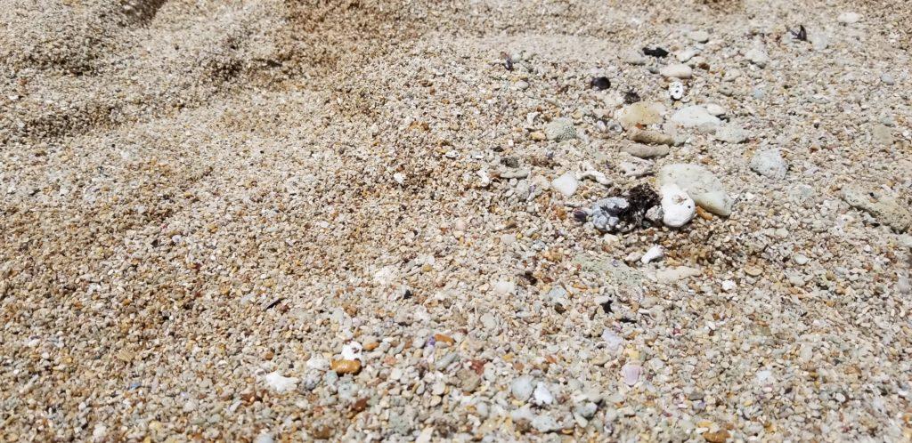 サンライズシェルビーチの砂浜