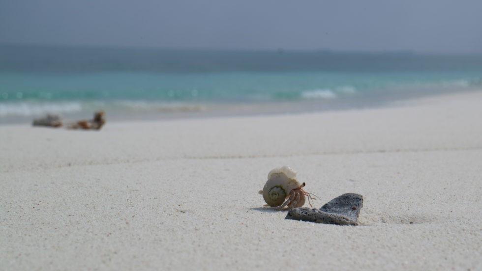 モルディブで撮影したヤドカリ