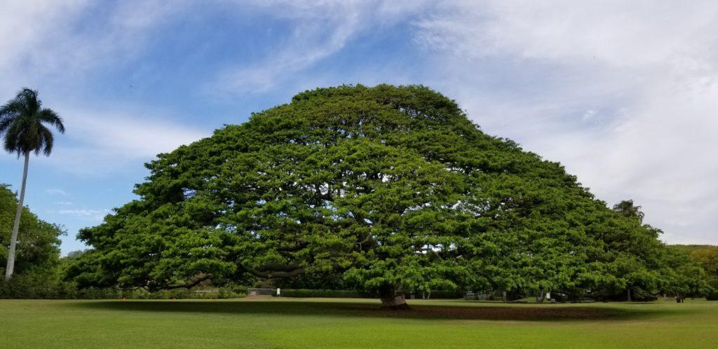 日立の樹「この木なんの木」