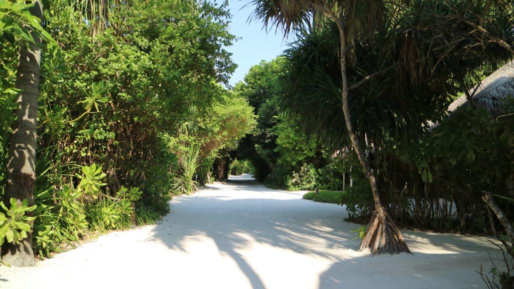 フィノール島内の道